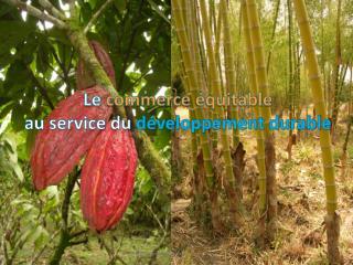 Le  commerce  équitable au service du  développement durable