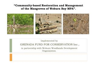 """Community-based Restoration and Management of the Mangroves of Woburn Bay MPA""."