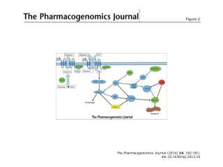 The Pharmacogenomics Journal  (2014)  14 , 182-191; doi:10.1038/tpj.2013.16