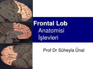 Frontal Lob       Anatomisi        Islevleri