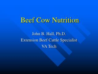 Beef Cow Nutrition