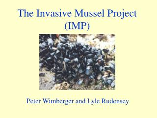 The Invasive Mussel Project (IMP)