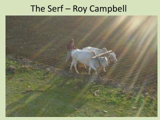 The Serf   Roy Campbell