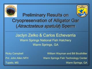 Preliminary Results on Cryopreservation of Alligator Gar ( Atractosteus spatula ) Sperm