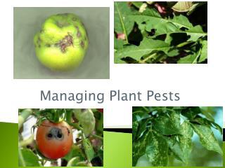 Managing Plant Pests