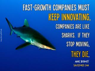 Companies are like  sharks.  If they  stop moving ,  they die .