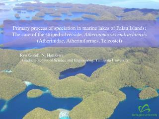Primary process of speciation in marine lakes of Palau Islands: