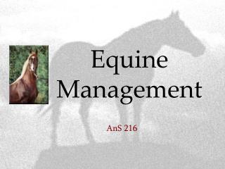 Equine Management