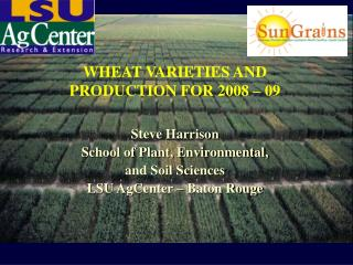 WHEAT VARIETIES AND  PRODUCTION FOR 2008 – 09 Steve Harrison School of Plant, Environmental,