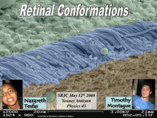 Retinal Conformations