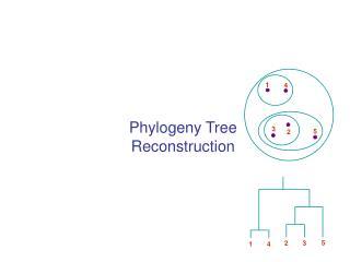 Phylogeny Tree Reconstruction