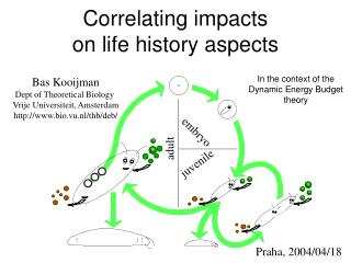 Correlating impacts  on life history aspects