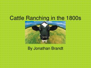Cattle Ranching in the 1800s