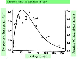 Influence of leaf age on assimilation efficiency