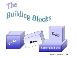 The Building Blocks