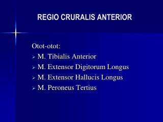 REGIO CRURALIS ANTERIOR