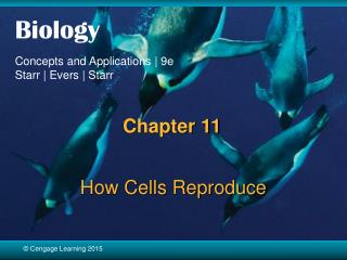 How Cells Reproduce