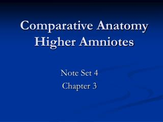 Comparative Anatomy Higher Amniotes