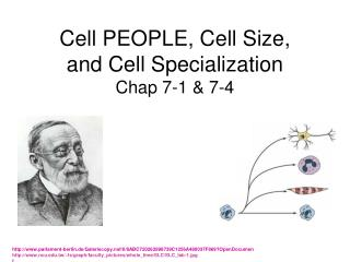 Cell PEOPLE, Cell Size,  and Cell Specialization  Chap 7-1 & 7-4