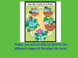 Today: you will be able to identify the different stages of the plant life cycle.