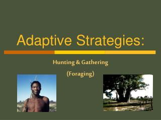 Adaptive Strategies: