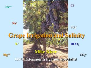 Grape Irrigation and Salinity