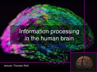 Information processing in the human brain