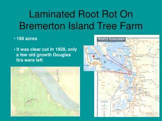 Laminated Root Rot On Bremerton Island Tree Farm