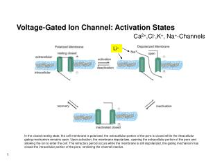 Voltage-Gated Ion Channel: Activation States