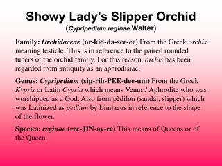 Showy Lady's Slipper Orchid ( Cypripedium reginae Walter)