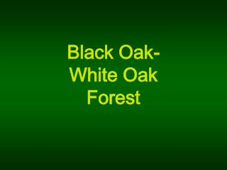 Black Oak-  White Oak  Forest