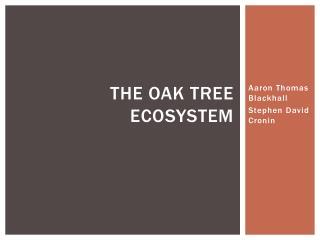 The Oak Tree Ecosystem