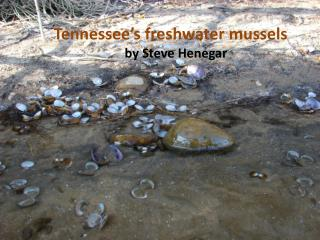 Tennessee s freshwater mussels