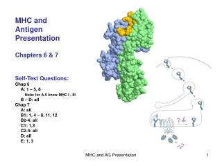 MHC and  Antigen  Presentation Chapters 6 & 7
