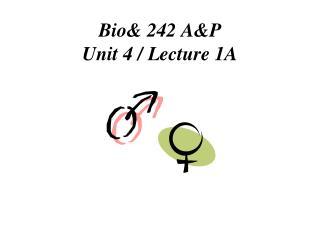 Bio& 242 A&P  Unit 4 / Lecture 1A