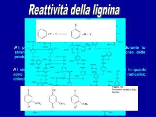 Reattivit  della lignina