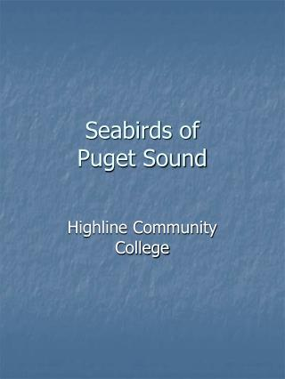 Seabirds of  Puget Sound
