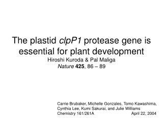 The plastid  clpP1  protease gene is essential for plant development Hiroshi Kuroda & Pal Maliga