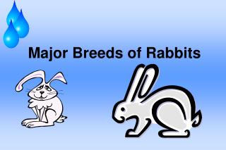 Major Breeds of Rabbits