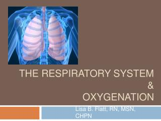 The Respiratory System   Oxygenation