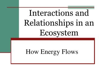 Interactions and Relationships in an Ecosystem