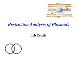 Restriction Analysis of Plasmids