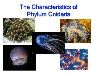 The Characteristics of Phylum Cnidaria