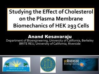 Studying the Effect of Cholesterol on the Plasma Membrane Biomechanics of HEK 293 Cells
