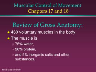 Muscular Control of Movement Chapters 17 and 18