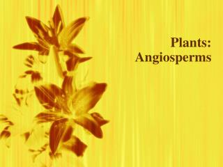 Plants: Angiosperms