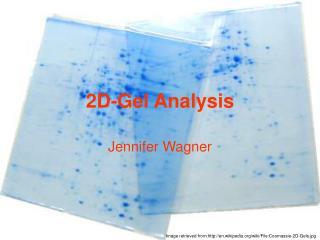 2D-Gel Analysis