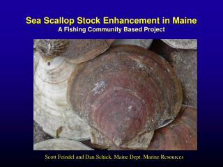 Sea Scallop Stock Enhancement in Maine A Fishing Community Based Project