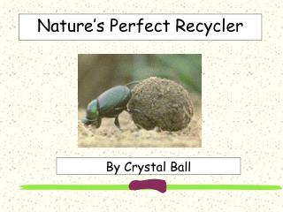Nature's Perfect Recycler