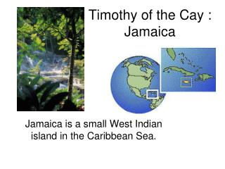 Timothy of the Cay :           Jamaica